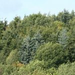 Tree Breeding and Forest Products - An update on current research