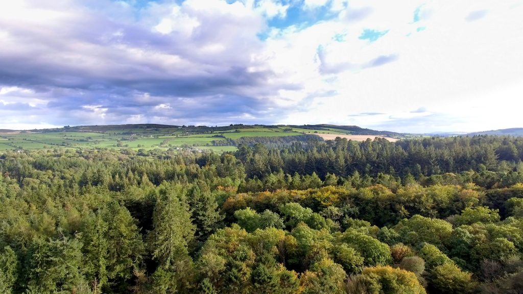 Forested landscape in Ireland