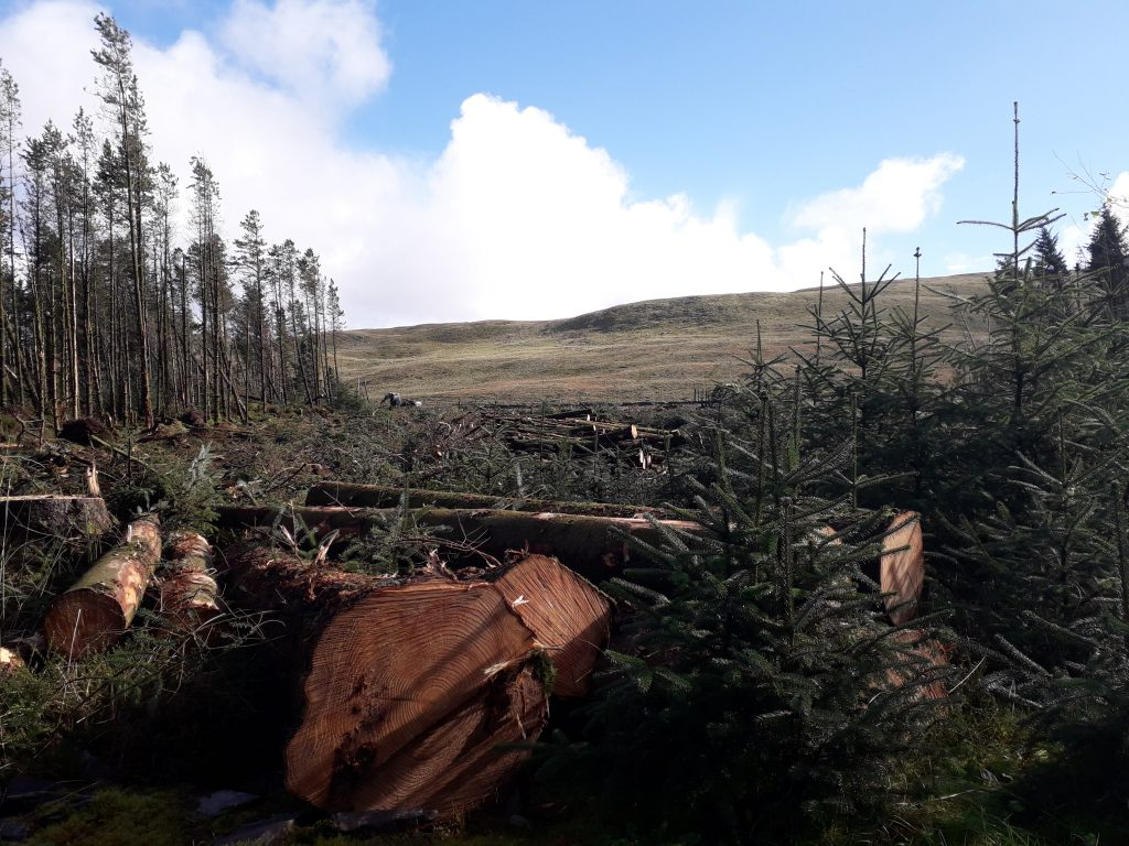 Felling site with bare hillside behind
