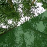 Capturing Carbon: Investing in Woodlands—An Options Analysis for Welsh Housing Associations