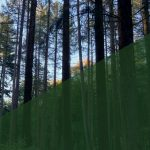 More and Better Home-Grown Timber—The role for a consolidator