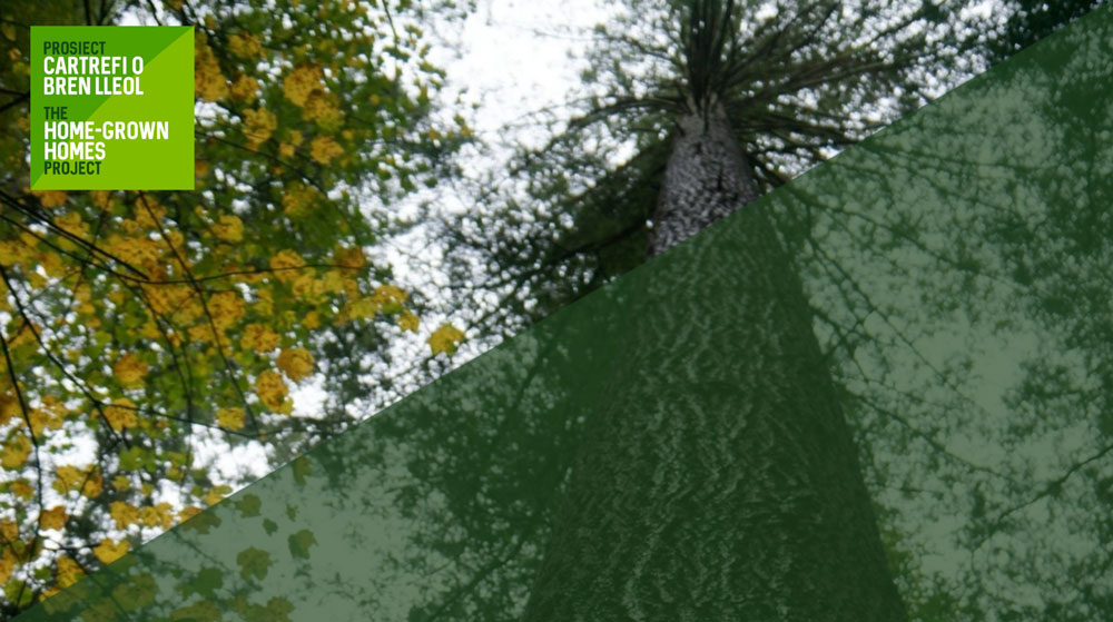 The role of our own conifer forests for building a sustainable society in Wales