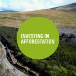 Investing in Afforestation—Economic aspects of woodland creation for timber production | Briefing Papers